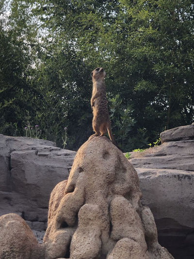 View of a cat sitting on rock