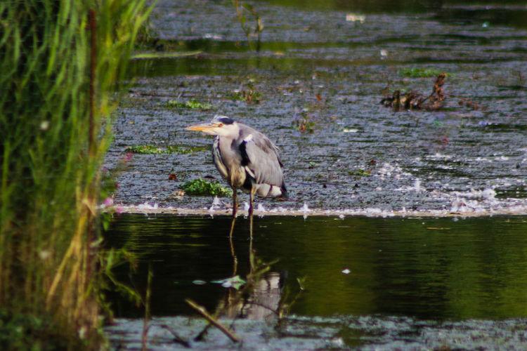 Heron Bird Lakes  Dusk