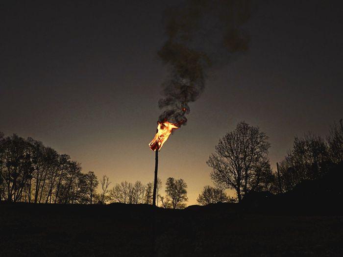 torch Tree