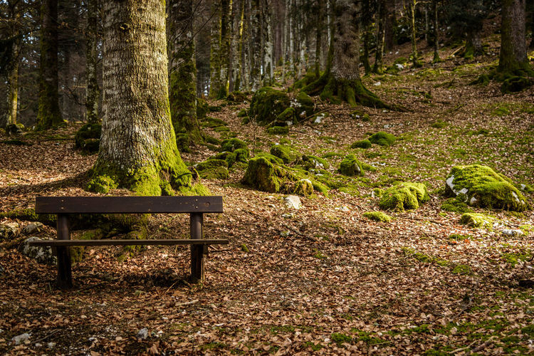 Erve Erve Miozzo Photo Miozzo Non-urban Scene Day Tranquil Scene No People Nature Beauty In Nature Tree Trunk Tranquility Forest Tree Plant Wood - Material Outdoors Scenics - Nature Bench Land Trunk Park Bench Seat WoodLand Growth