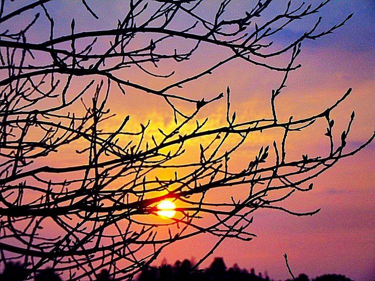 sun down Sweden The True Story EyeEmNewHere Tree Branch Bare Tree Sunset Bird Silhouette Sun Sky Sky Only Half Moon Dramatic Sky Heaven Cumulus Cloud Cloudscape Summer Exploratorium