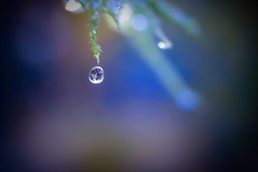 moment Macro Nature Drop Focus On Foreground Freshness Soft Focus Selective Focus EyeEm Nature Lover Macro Nature Moment Of Silence Still Life Reflections In The Water