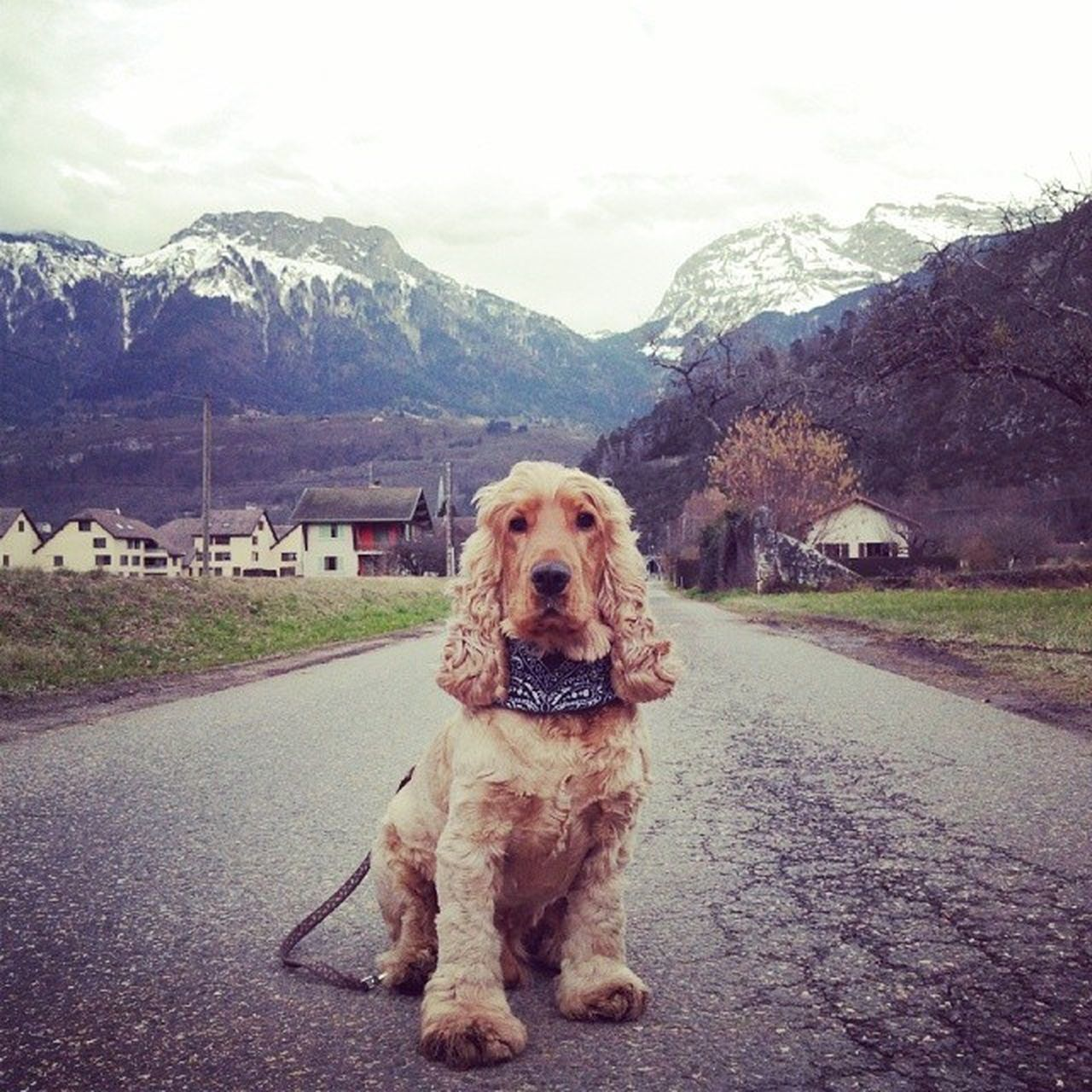 dog, mountain, pets, one animal, animal themes, domestic animals, looking at camera, portrait, mountain range, outdoors, mammal, nature, day, sky, beauty in nature, no people, sitting