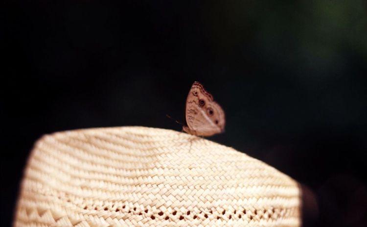 ピンボケ写真 Reversal Film Film Photography Filmcamera Nature Kodakektar100 OpenEdit EyeEm
