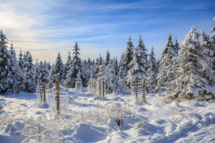 wintry forest at a sunny day near Masserberg in Thuringia, Germany Adventure, Area, Europe, European, Forest, Holidays, Landscape, Mountains, Nature, Nordic, Outdoors, Sky, Snow, Sunlight, Sunny, Trees, Trip, Vacations, Winter, Wintry Snow Winter Cold Temperature Tree Beauty In Nature Plant Tranquility Covering Nature Sky Scenics - Nature Tranquil Scene No People White Color Day Land