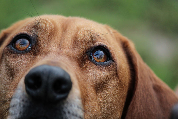 Animal Animal Body Part Animal Eye Animal Head  Animal Themes Close-up Day Dog Domestic Animals Eye Looking At Camera Mammal Nature No People One Animal Outdoors Pets Portrait