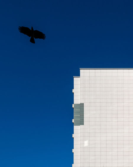 Blue No People Clear Sky Sky Fujix_berlin Ralfpollack_fotografie Minimalism Minimalist Photography  Flying Animal Themes Bird One Animal Animal Spread Wings Built Structure Low Angle View Building Exterior Outdoors Day Architecture