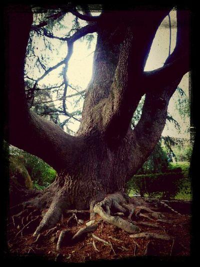 Trees #árboles Nature_collection EyeEmBestEdits EyeEm