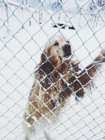 Close-up of dog on chainlink fence during winter