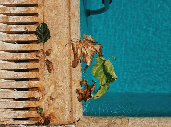 Autumn, by the pool. Autumn Leaves Swimming Pool Blue Tiles Day Autumn Colors Eyemphotography Lawyers Alliance For EyeEm EyeEm Best Shots Fresh On Eyeem  Eye4photography  No People Tranquil Scene Scenics EyeEm Gallery EyeEm TakeoverContrast IMography Dramatic Angles Adapted To The City