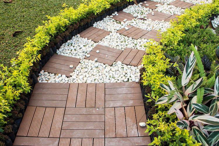 High angle view of flowering plants in garden
