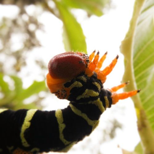 Betosalvestrini Mérida Ula Jardinbotanico Nature Quickphoto Abugslife Bugs Hailtheking Macro Green Art Rcnocrop