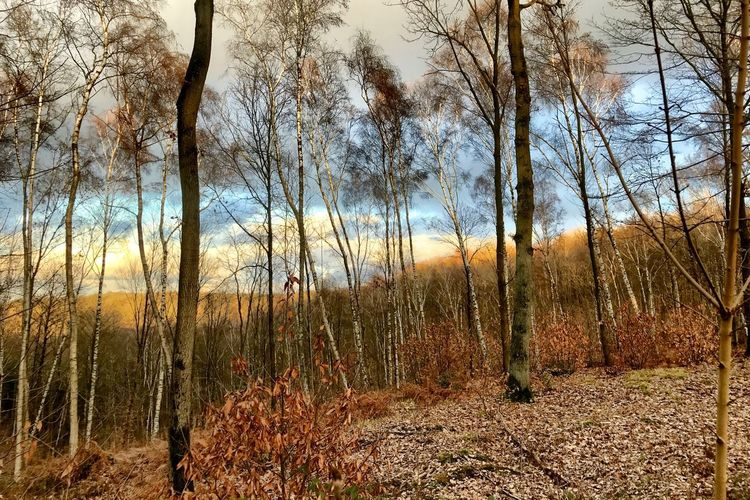 Porchfontaine Tree Plant Sky Tranquility Land Nature No People Tranquil Scene Beauty In Nature Cold Temperature Landscape Scenics - Nature Bare Tree Forest