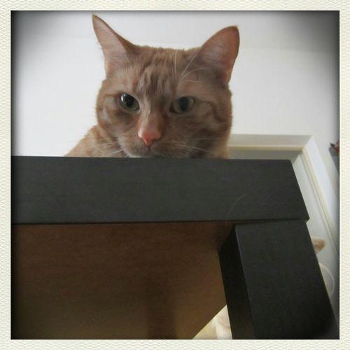 Mein Kater I Love My Cat Canon Ixus 115 HS Februar 2014