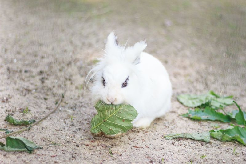 One Animal Animal Themes Domestic Animals Pets Nature Leaf Outdoors Rabbit Hase Kaninchen Haustier Pet Portraits