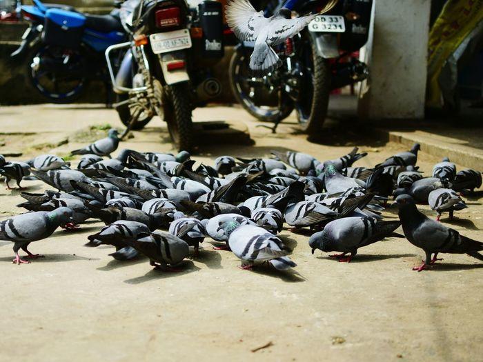 Birds perching on street