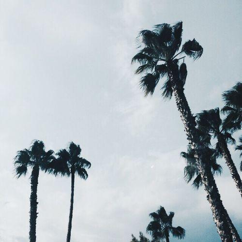 Summer Missyou 🌴