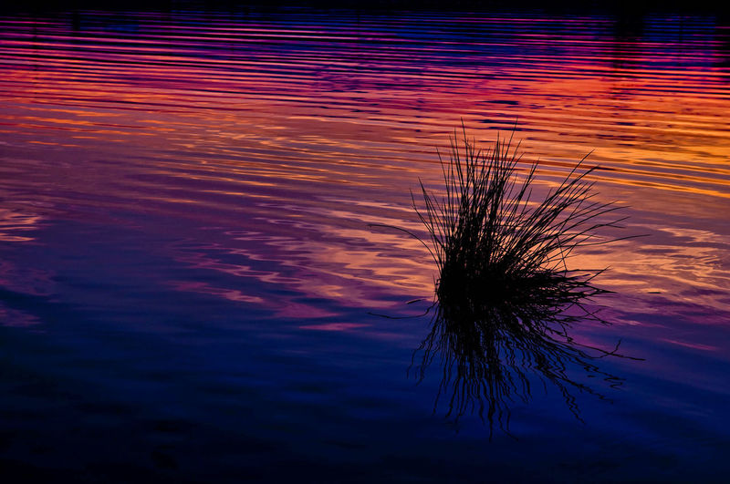 Close-up of silhouette plant against lake during sunset