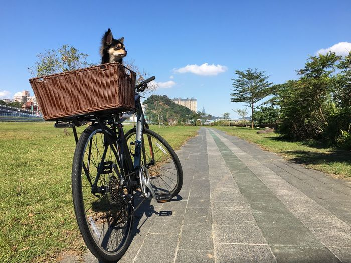 Bicycle Dog Sunny Day Cycling Outdoor