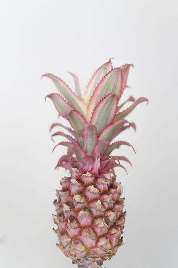 Ananas Close-up Detail Freshness Fruit Leaf Natural Pattern Pastel Pastel Colors Pastel Power Pineapple Pink Plant Selective Focus