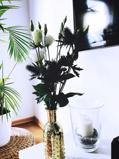 Vase Indoors  Table Potted Plant Bottle Plant Growth Home Interior Flower Freshness Nature No People