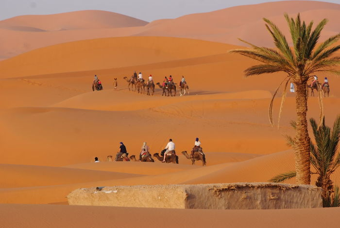 Camel Trip Merzouga Sahara Desert Trippin Moment Of Silence Palm Tree Beauty In Nature Desert Lifestyles Sand Dune Vacations