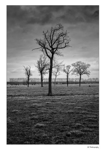 Trees Atmosphere Bare Tree Beauty In Nature Blackandwhite Cloud Idyllic Landscape Nature Non-urban Scene Outdoors Remote Sky Tranquil Scene Tranquility Tree