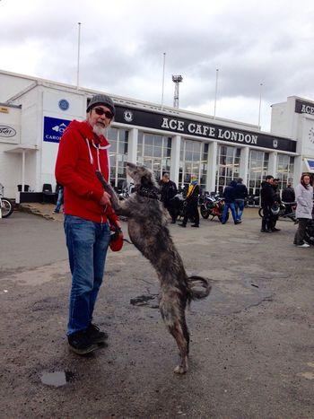 LEO... The One Eyed Lurcher... Sighthound Lurcher I Love My Dog