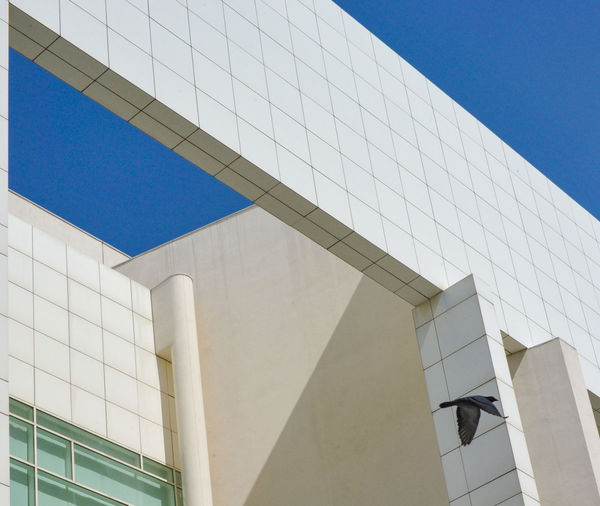 MACBA Architecture Bird In Flight Blue Sky Building Building Exterior Glass Modern Structure