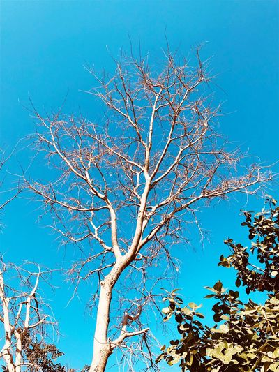 Shades Of Winter Winter Sky Coloursofnature Coloursofwinter Bare Tree Blue Nature Branch Tree Clear Sky Low Angle View Beauty In Nature Shades Of Winter