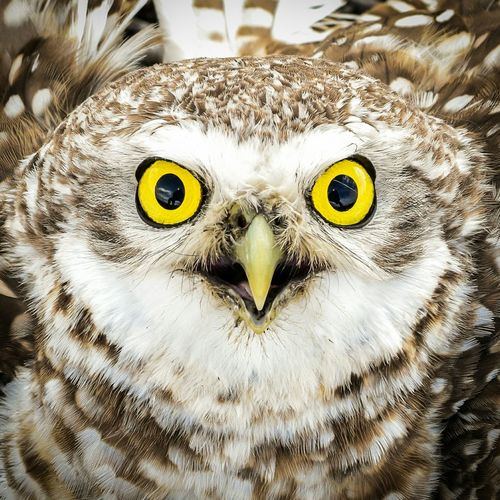 Rethink Things EyeEm Selects Animal Body Part Looking At Camera Bird Portrait Animal Head  One Animal Animals In The Wild Close-up Bird Of Prey Eye Animal Themes Animal Wildlife Owl No People Nature Parrot Day Outdoors Eyeball