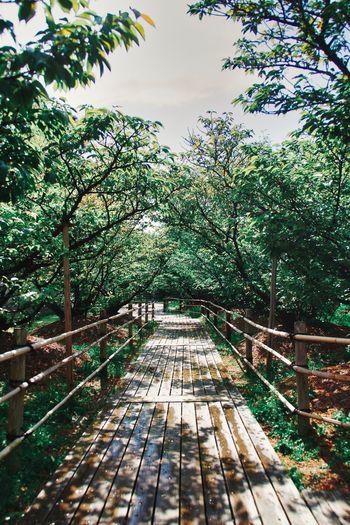 Footbridge along trees in park