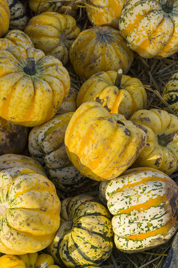 Autumn Backgrounds Close-up Day Food Food And Drink Freshness Gourd Halloween Healthy Eating High Angle View Market No People Pumpkin Squash - Vegetable Vegetable Yellow