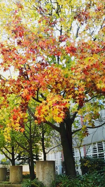 Autumn Nature Hello World Tree Nature Photography Nature_collection Naturelovers Nature_perfection Autumn Leaves First Eyeem Photo