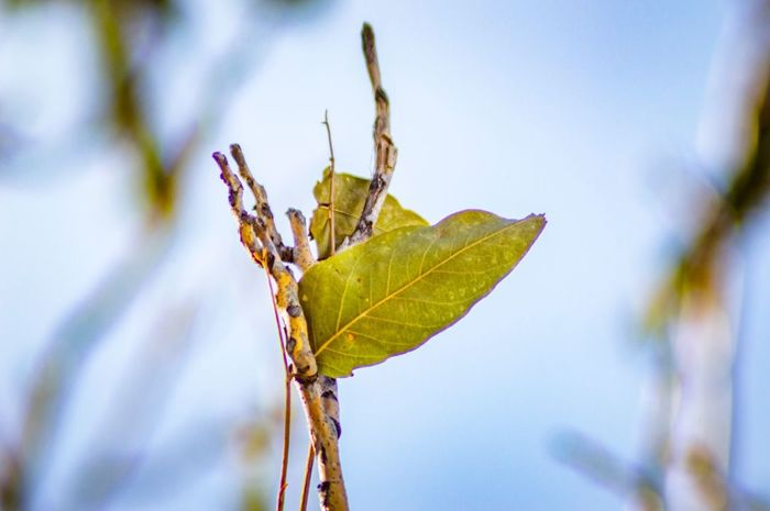 Tranquility Moments Nature Love EyeEm Selects Plant Part Leaf Plant Nature Close-up Focus On Foreground No People Outdoors Beauty In Nature Selective Focus Tranquility Plant Stem Growth Tree Day Twig Sky Sunlight