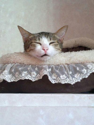Pet13 Cats Pets Pet Cat Cat Lovers Petlover Pet Lover Cat♡ Pet Love
