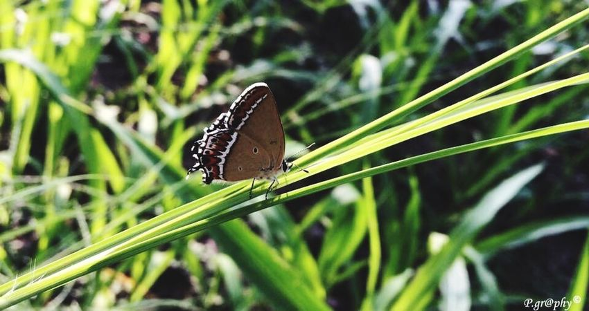 🦋 Wildlife Plant Nature Day Leaf Grass Green Color Butterfly Close-up