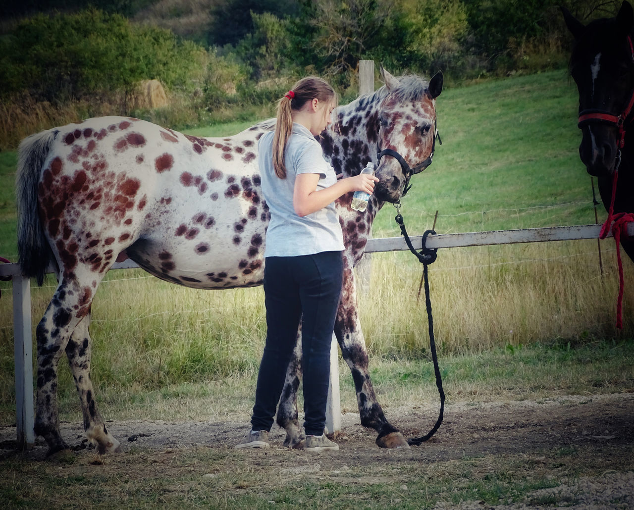 FULL LENGTH OF A HORSE STANDING IN FIELD