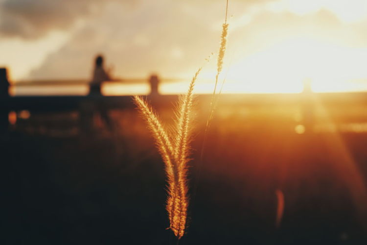 Sunset Cereal Plant Backgrounds Close-up Sky Shining Silhouette Sun Orange Color Sunbeam Blade Of Grass