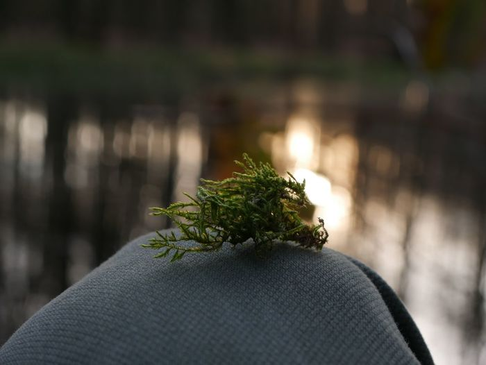 Moss Calm Focus Trees Focus On Foreground Close-up One Person Human Body Part Real People Plant Day Nature Body Part Outdoors Unrecognizable Person Personal Perspective Lifestyles Green Color Human Finger