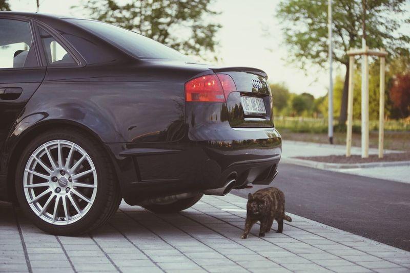 Audi Cat Audi A4 DTM