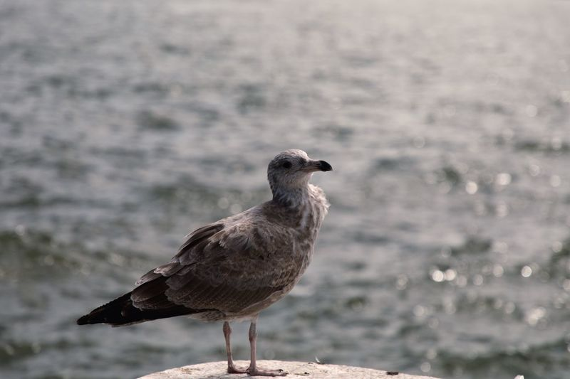 About to fly. EyeEm Selects Bird Animal Themes Vertebrate Animal Wildlife Animals In The Wild Animal One Animal Focus On Foreground Nature Day Perching Water No People Close-up Outdoors Sunlight Seagull
