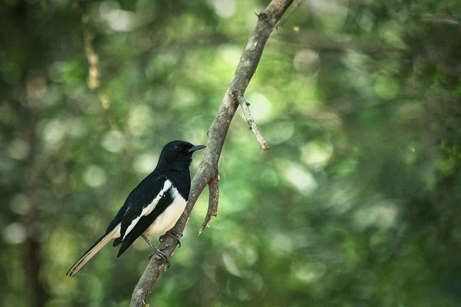 Hi Birds Eyeemnatureshots Magpie Morning Canon Eos 1100 D Canon Lovelynatureshots Nature_collection Naturephotography Taking Photos Getting Inspired Open Edit
