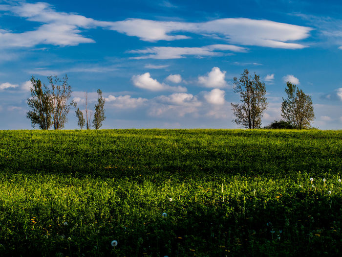 Green field Beauty In Nature Cloud - Sky Day Field Green Green Color Landscape Outdoors Rural Scene Sky Tranquil Scene Tranquility Tree