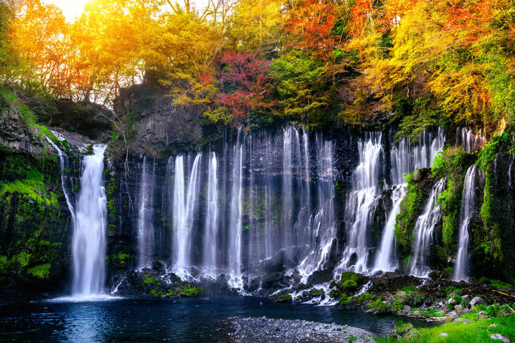 Shiraito waterfall in Japan. Water Tree Scenics - Nature Waterfall Plant Beauty In Nature Autumn Long Exposure Forest Motion Flowing Water Nature Land No People Blurred Motion Rock Day Solid Rock - Object Change Outdoors Flowing Power In Nature Rainforest Running Water