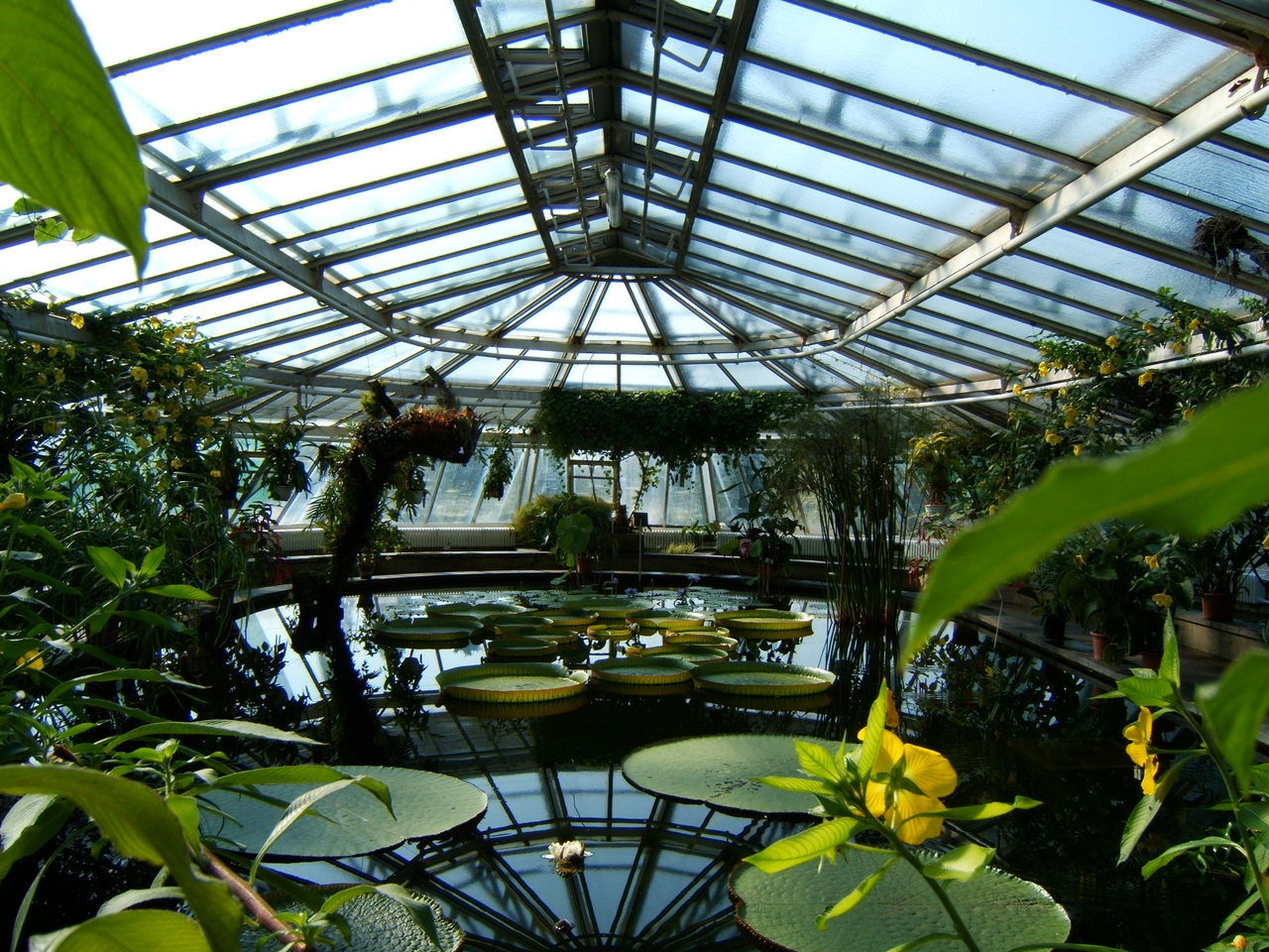 plant, greenhouse, growth, indoors, leaf, flower, architecture, built structure, ceiling, nature, day, green color, no people, beauty in nature, water, botanical garden, plant nursery, tree