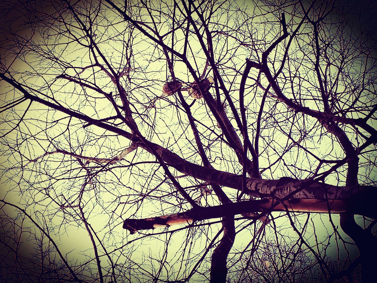 tree, bare tree, outdoors, nature, branch, low angle view, day, no people, sky, beauty in nature, dead tree