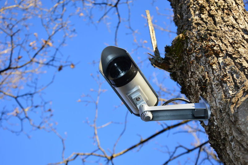 Low angle view of camera on tree