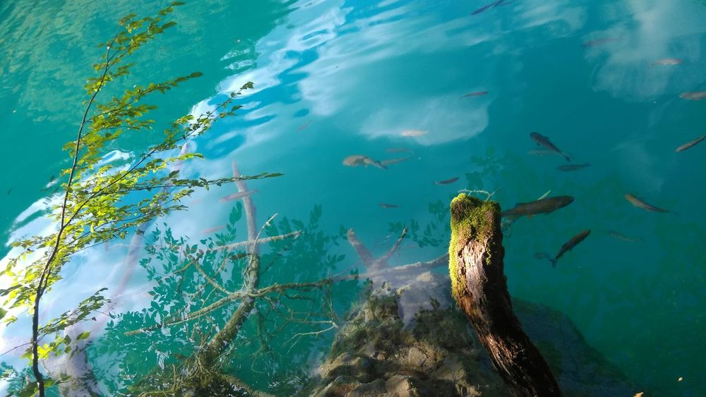 Nature_ Collection  Travelphotography Travelphoto Water_collection Watercolor Plitvice National Park Plitvice Clear Water Croatia_photography Croatia Amazingnature Beautyofnature Photoofnature Lake Amazing Places