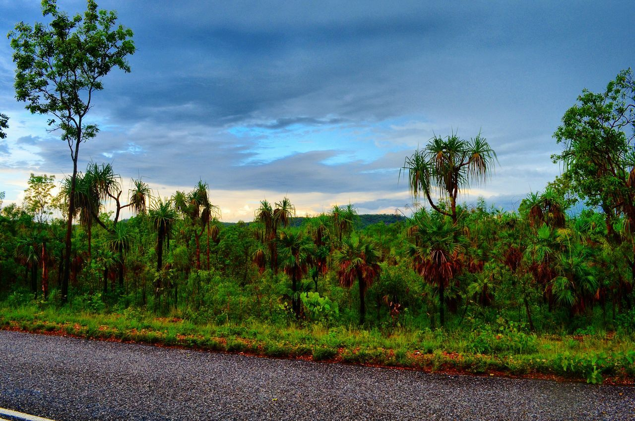 tree, growth, nature, sky, road, plant, beauty in nature, no people, tranquility, tranquil scene, outdoors, day, cloud - sky, green color, landscape, scenics, grass